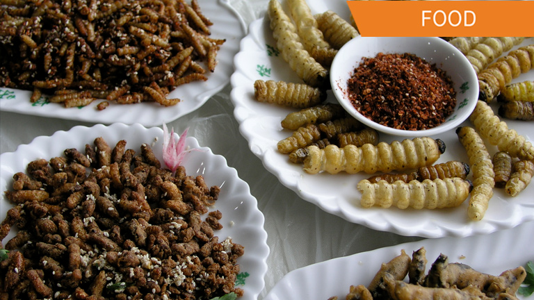 Bugs & Insects You Can Eat as Suggested by the U.N.