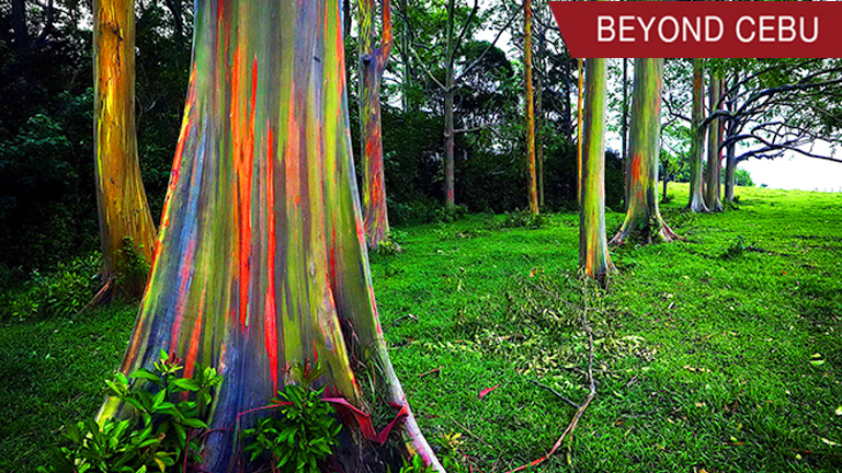 2017 6 28 rainbow trees beyond cebu main