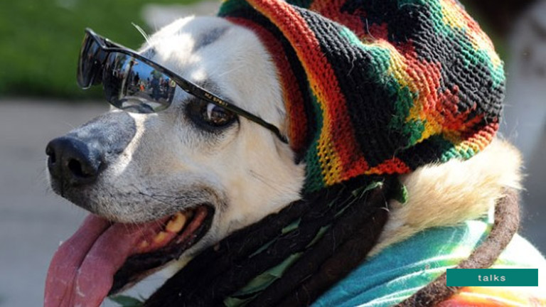 Dogs prefer reggae and soft rock